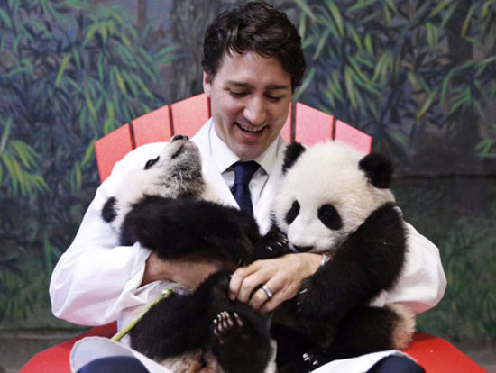 photograph of beautiful Canadian Prime Minister Justin Trudeau with baby pandas | Tacky Harper's Cryptic Clues