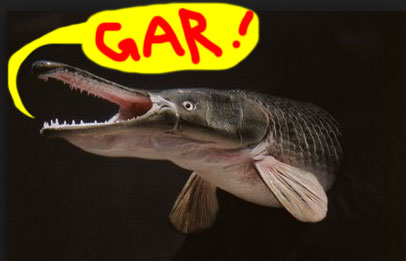 photo of a gar fish | Tacky Harper's Cryptic Clues